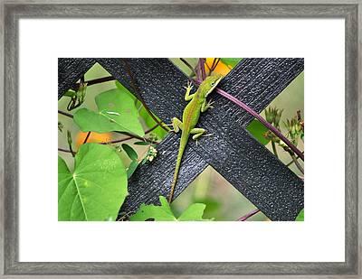 Green Lizard On Fence Framed Print by Terri Albertson
