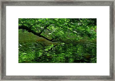 Green  Framed Print by Michele Mule'