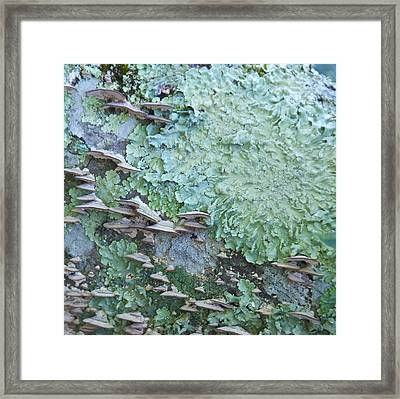 Green Mossy Fungus Party Framed Print by Cindy Lee Longhini