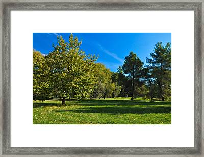 Green Oasis Framed Print by Stavros Argyropoulos