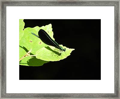 Green On Green Framed Print by Don L Williams