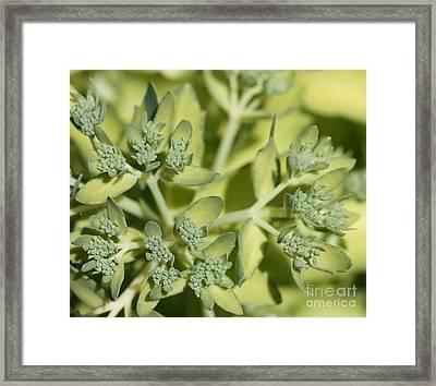 Green On Green Framed Print by James E Weaver