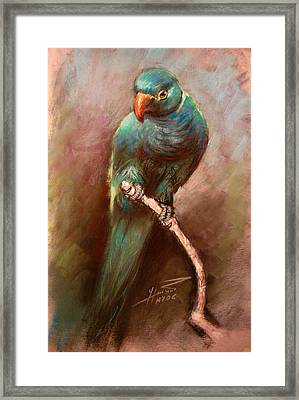 Green Parrot Framed Print by Ylli Haruni
