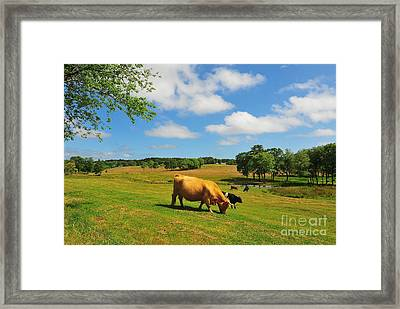 Green Pasture Framed Print by Catherine Reusch Daley