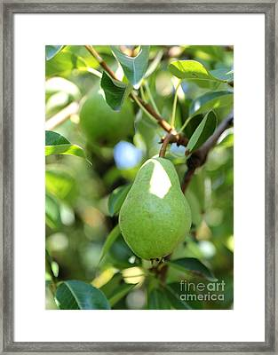 Green Pear Framed Print by Carol Groenen