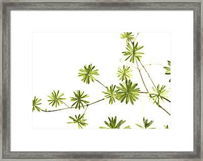 Green Plant Framed Print by Blink Images