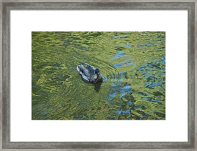 Framed Print featuring the photograph Green Pool by Joseph Yarbrough