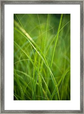 Green Prairie Grass Framed Print by Steve Gadomski