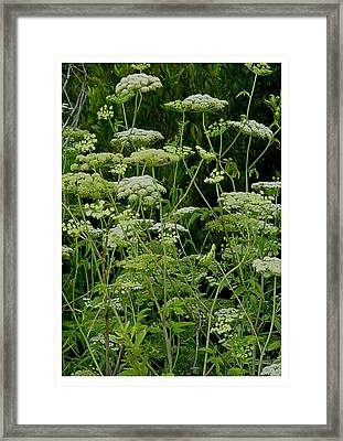 Green Randomness Framed Print