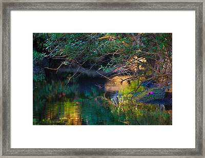 Green Reflections Framed Print