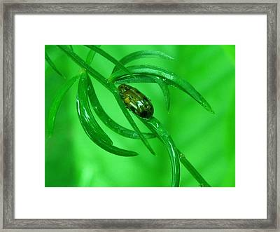 Green Framed Print by Rinesh K