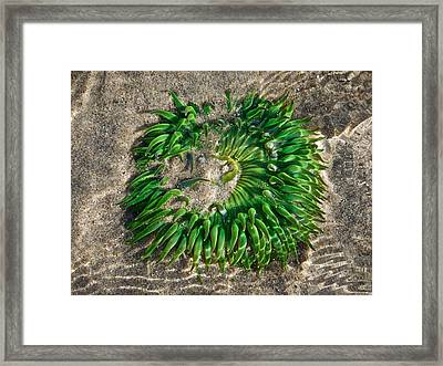 Green Sea Anemone Framed Print