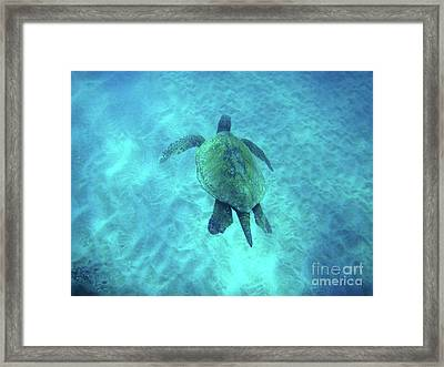 Green Sea Turtle 2 Framed Print by Bob Christopher