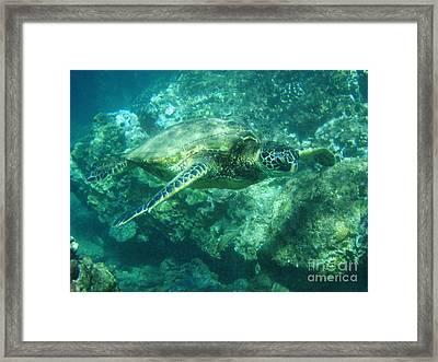Green Sea Turtle Hawaii Framed Print by Bob Christopher