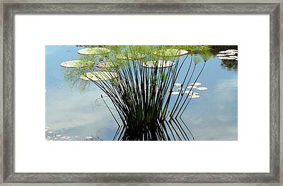 Green Shade Framed Print by