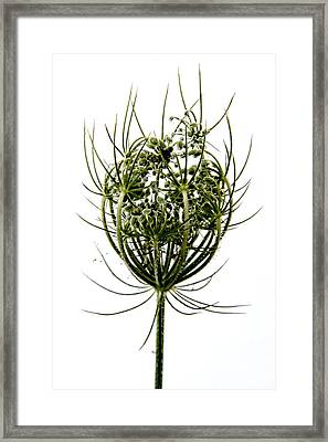 Green Framed Print by Stelios Kleanthous