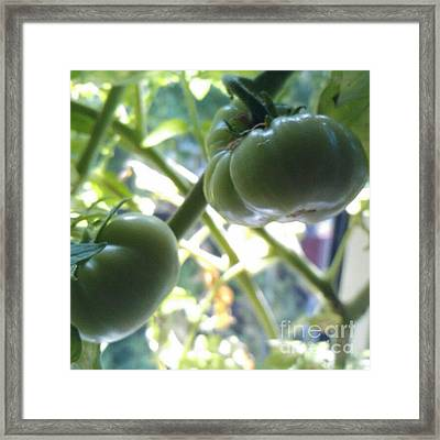 Green #tomatoes #instaprints Framed Print