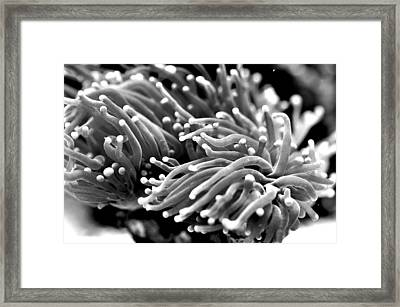 Framed Print featuring the photograph Green Torch  by Puzzles Shum