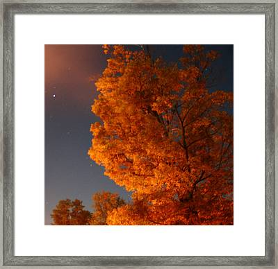 Green Tree At Night Framed Print by Devon Stewart