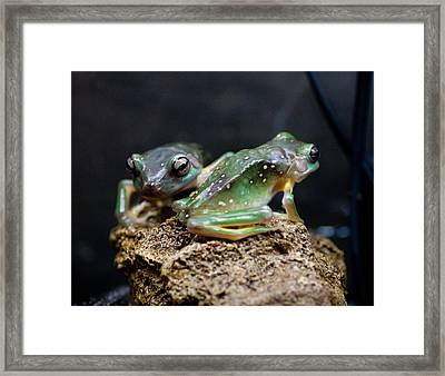 Green Tree Frogs Framed Print