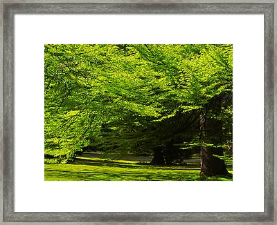 Green Trees In Stanley Park Framed Print