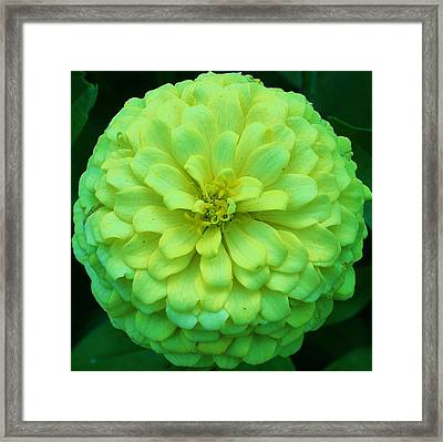 Green With Envy 1 Framed Print by Bruce Bley