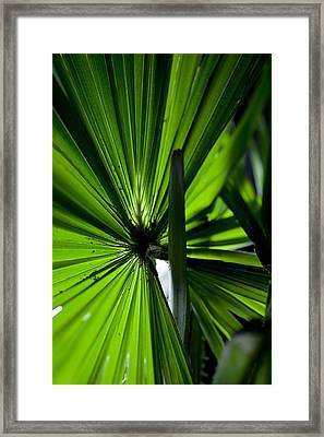 Framed Print featuring the photograph Greenery by Carole Hinding