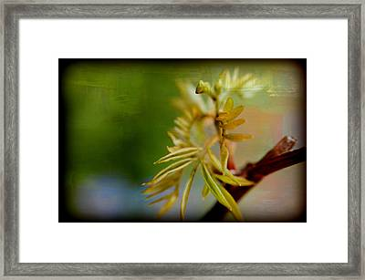 Greeness Framed Print by Martha Hughes