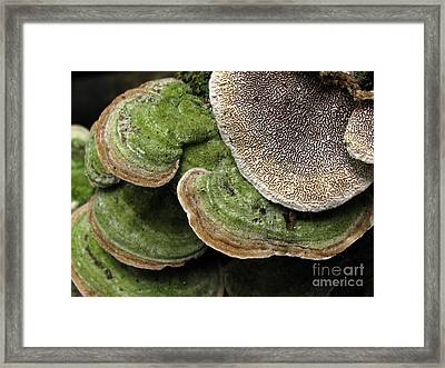 Greening Velvet Brackets Framed Print
