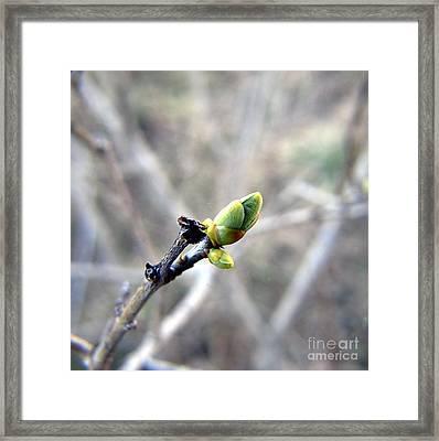 Greennnn Spring Framed Print by Yury Bashkin
