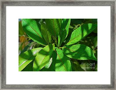 Greensleaves2 Framed Print