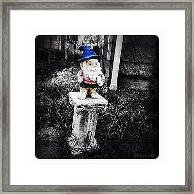 Greenville's Garden Gnome Framed Print