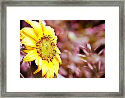 Greeting The Sun. Framed Print by Cheryl Baxter