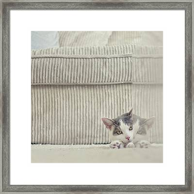Grey And White Cat Peeking Around Corner Framed Print by Cindy Prins