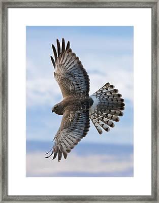 Grey Ghost Flight Framed Print