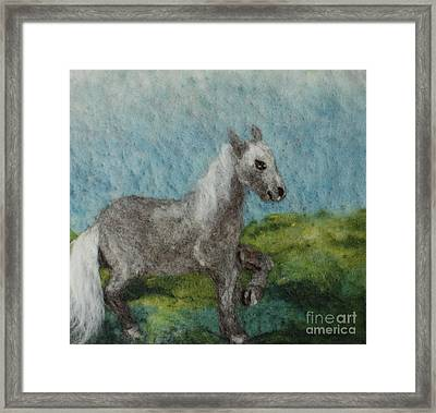 Grey Horse Framed Print by Nicole Besack