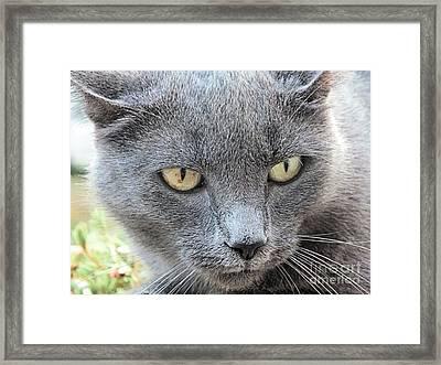 Grey Kitty 2 Framed Print