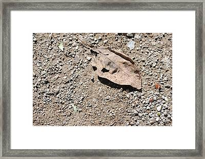 Grey Leaf On Ground Framed Print
