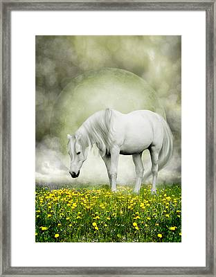 Grey Pony In Field Of Buttercups Framed Print