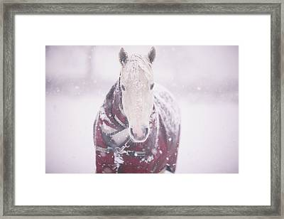 Grey Pony In Red Rug Framed Print by Sasha Bell