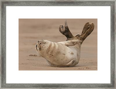 Grey Seal Pup Framed Print