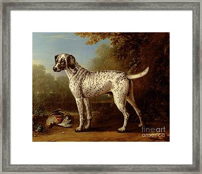 Grey Spotted Hound Framed Print by John Wootton