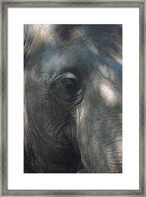 Grey Framed Print by Stephanie Hopkins