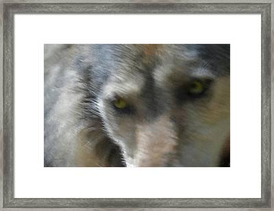 Grey Wolf Painterly Framed Print by Ernie Echols