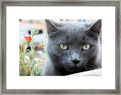Greycat Framed Print