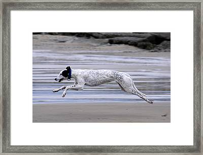 Greyhound - Flying Framed Print by Thomas Maya