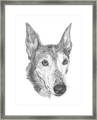 Greyhound Framed Print by Deb Gardner