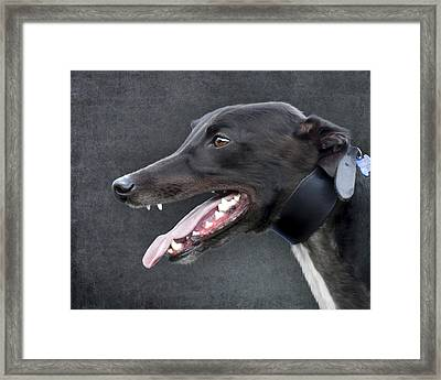 Greyhound Dog Portrait Framed Print by Ethiriel  Photography