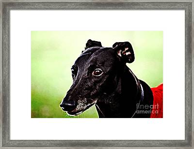 Greyhound Framed Print by The DigArtisT