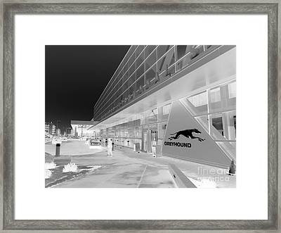 Greyhounding Framed Print